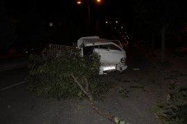 Kamyonetin çarptığı ağaç devrildi serçe telef oldu