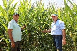 Mısır Üreticilerimiz Referans Fiyatın Açıklanmasını Bekliyor