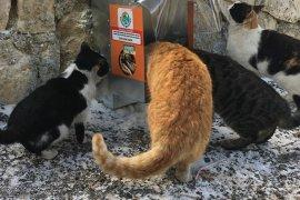 Sahipsiz Sokak Hayvanlarına Beslenme Noktaları Oluşturuldu