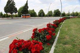 Şehir Merkezi Gül Ve Çiçeklerle Donatıldı