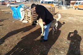 Ayağı kangren olan köpeğe dolmuş şoförleri sahip çıktı