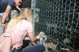 Hayvanseverlerden Barınağa Ziyaret