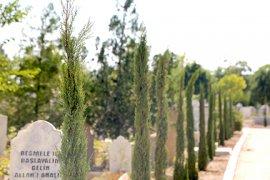 Şehir Mezarlığına 500 Adet Kara Selvi Ağacı Dikildi