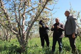 Karaman'da elmayı don vurdu