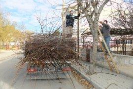 Şehrimizi Süsleyen Ağaçlar Budanıyor