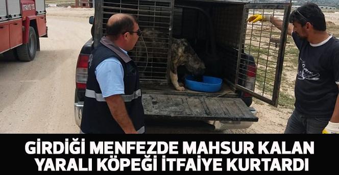 Girdiği menfezde mahsur kalan yaralı köpeği itfaiye kurtardı