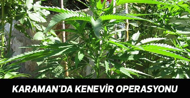 Karaman'da kenevir operasyonu