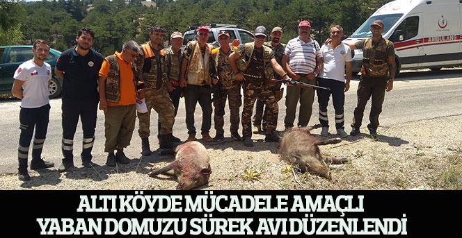 Altı Köyde Mücadele Amaçlı  Yaban Domuzu Sürek Avı Düzenlendi