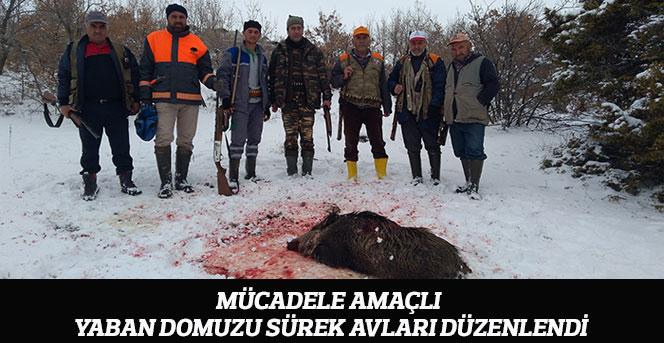 Mücadele Amaçlı Yaban Domuzu Sürek Avları Düzenlendi