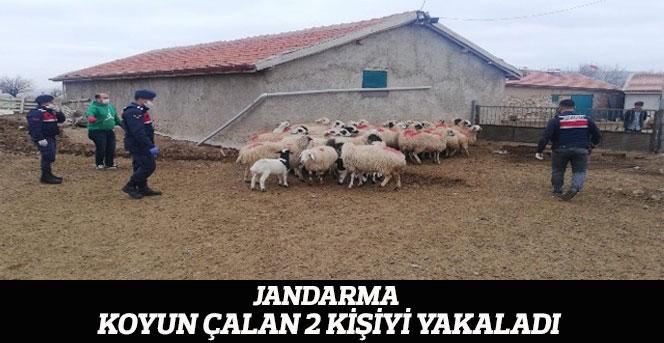 Jandarma, koyun çalan 2 kişiyi yakaladı