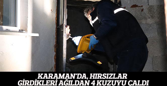Karaman'da, hırsızlar girdikleri ağıldan 4 kuzuyu çaldı