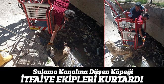 Karaman'da kanala düşen köpeği itfaiye kurtardı PAYLAŞ  TWEETLE