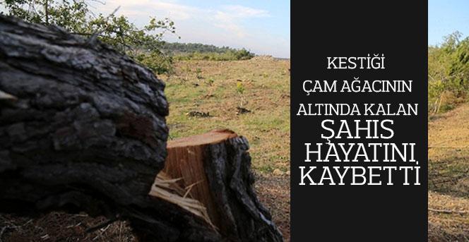 Kestiği çam ağacının altında kalan şahıs hayatını kaybetti