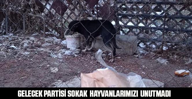 Gelecek Partisi Sokak  hayvanlarımızı  unutmadı