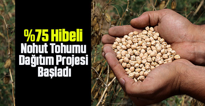 u Hibeli Nohut Tohumu Dağıtım Projesi Başladı