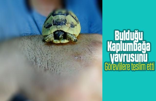 Kaplumbağa Yavrusunu Görevlilere Teslim Etti