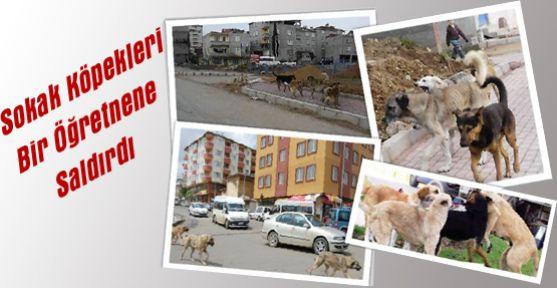 Karaman'da Sokak Köpekleri Saldırdı, Ölümden Döndü