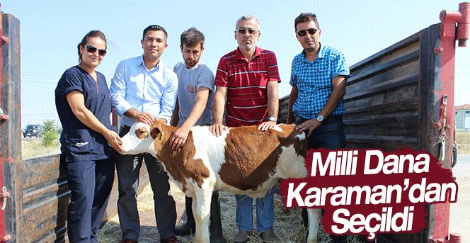 Milli Dana Karaman'dan Seçildi