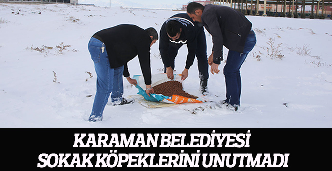Karaman Belediyesi Sokak Köpeklerini Unutmadı