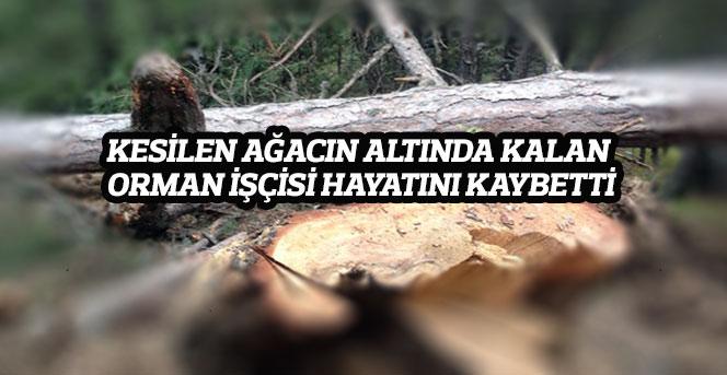Kesilen Ağacın Altında Kalan Orman İşçisi Hayatını Kaybetti
