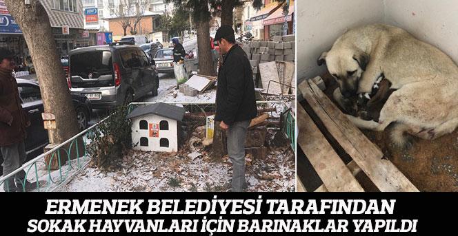 Ermenek Belediyesi Tarafından Sokak Hayvanları İçin Barınaklar Yapıldı
