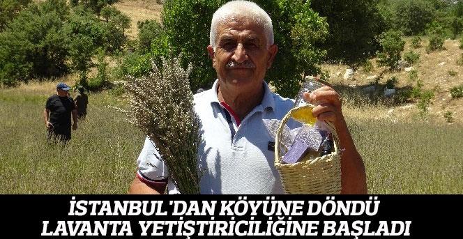 İstanbul'dan Köyüne Döndü Lavanta Yetiştiriciliğine Başladı