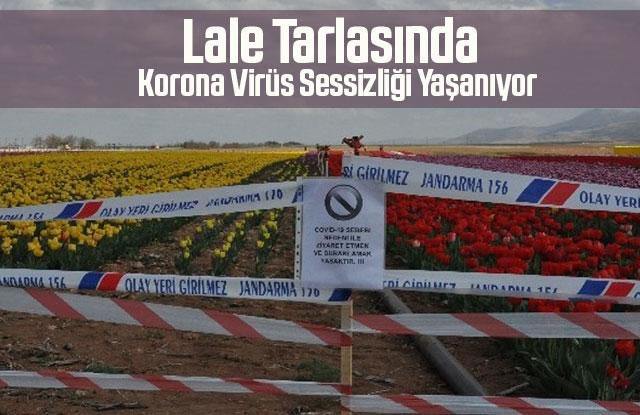 Karaman'da lale tarlasında korona virüs sessizliği